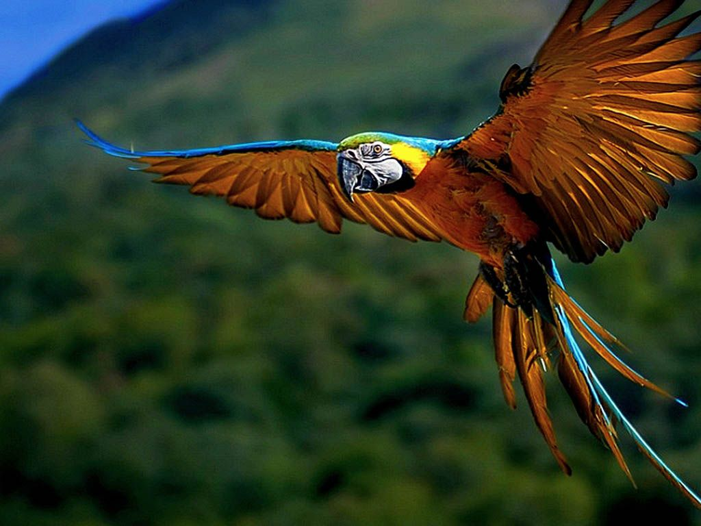 whistling birds latest hd wallpapers free download | free birds