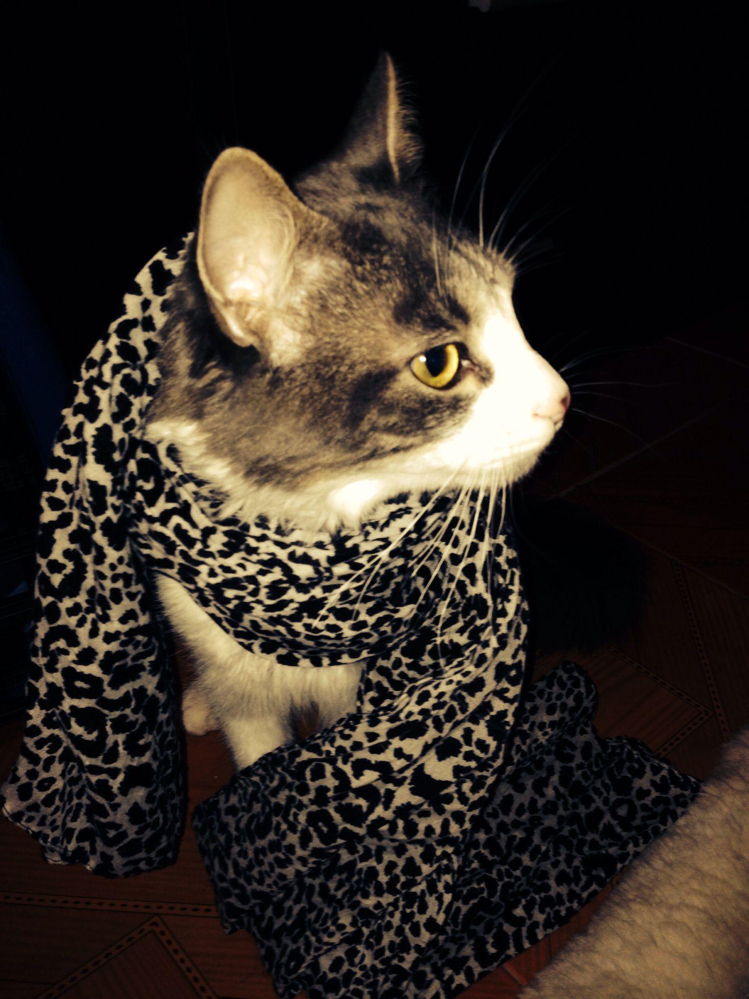 Fashionista' cat