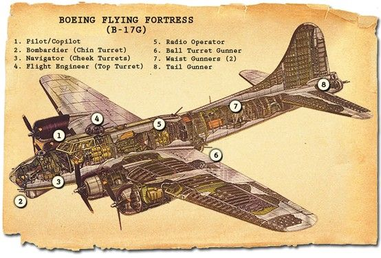 Cross-section of a B-17 Flying Fortress er, showing the crew ...