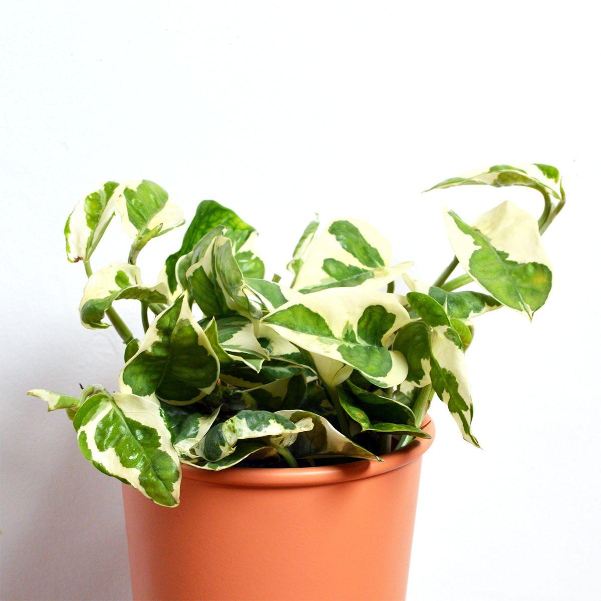 Pothos NJoy Plants, House plants, Unusual planter