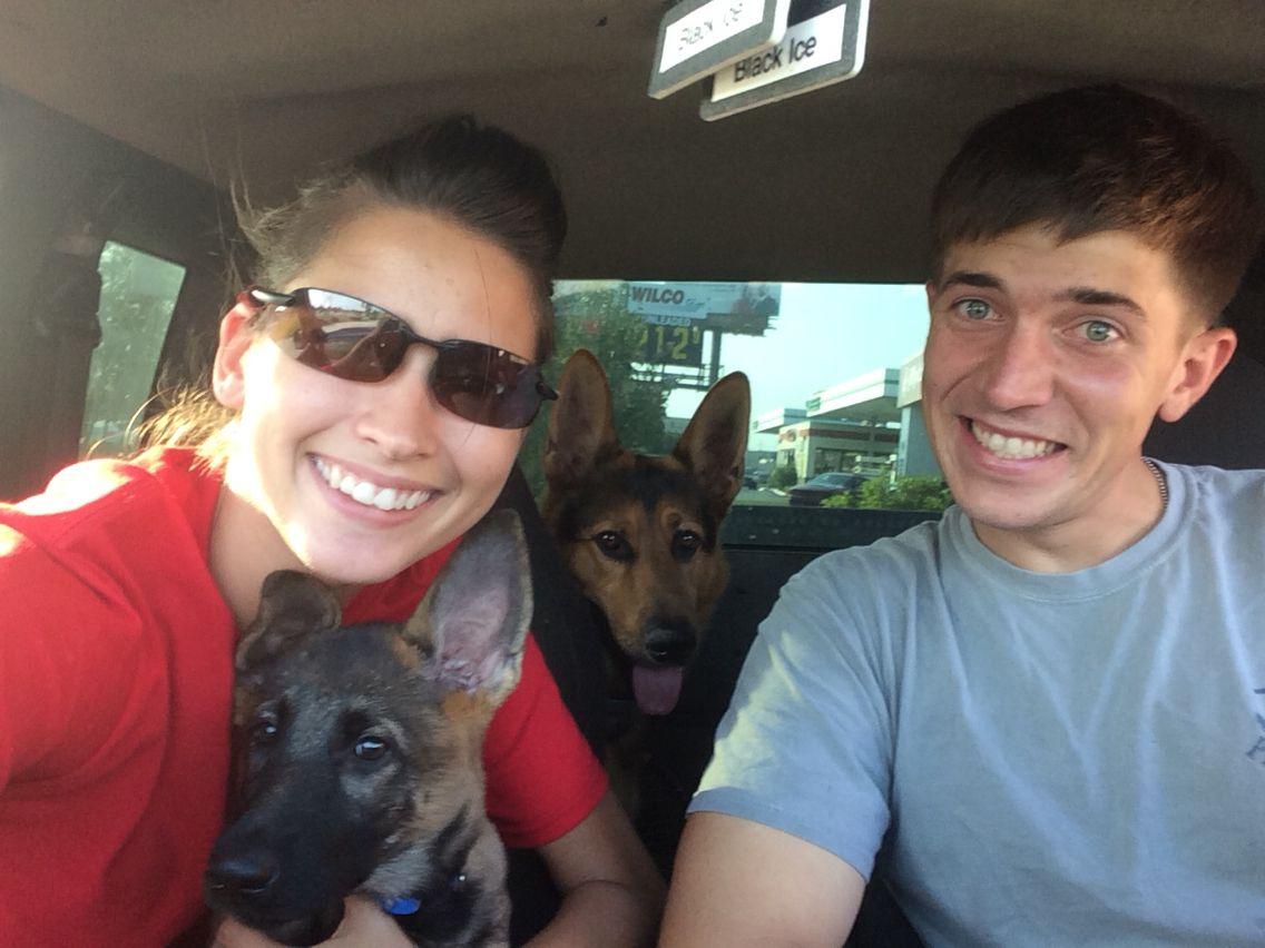 Our German Shepherd Family #gsd