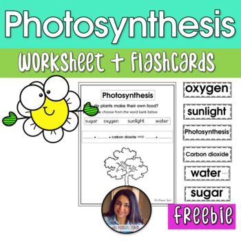 Photosynthesis - Freebie