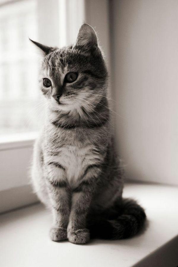 Ist Die Katze Ein Passendes Haustier Fur Sie Mit Bildern