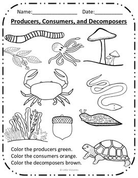 Color the Producers, Consumers, and Decomposers