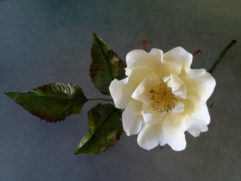 Open Wild Rose by Robert Haynes
