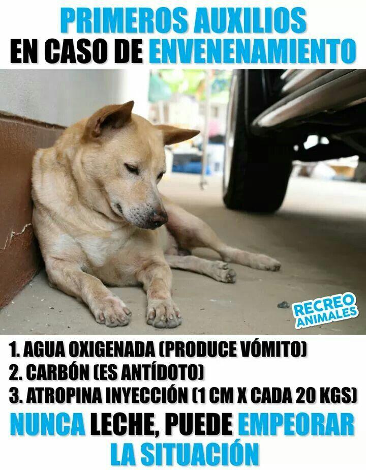 Pin De Jhay En Cachorros Productos Para Perros Historias De Perros Mascotas Bonitas