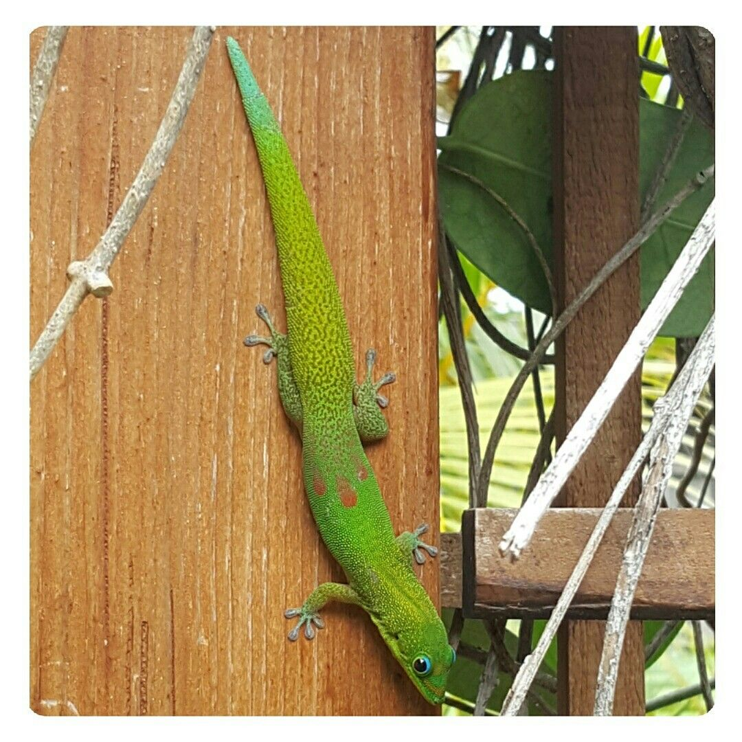 The friends you can find in paradise. #backyardtreasures # ...