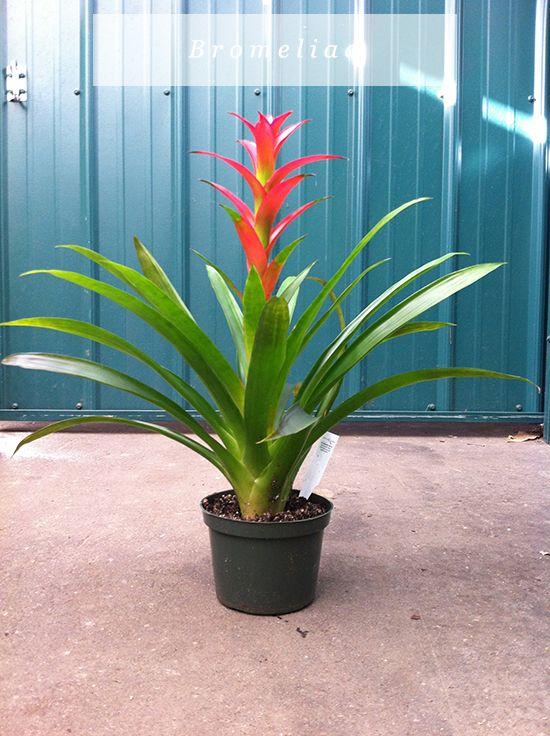 Low Maintenance House Plants