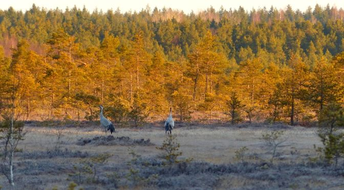 Kurjenrahkan kansallispuisto - Samuli Seppälä
