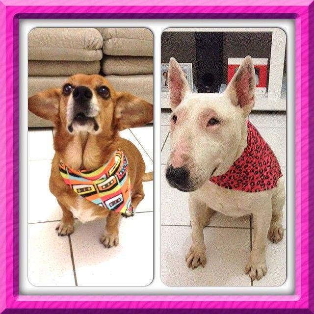 Que duplinha fashion! #patudos #pet #cachorro #dog