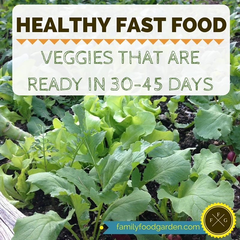 Easy Fast Growing Vegetables For Your Garden Fast 400 x 300