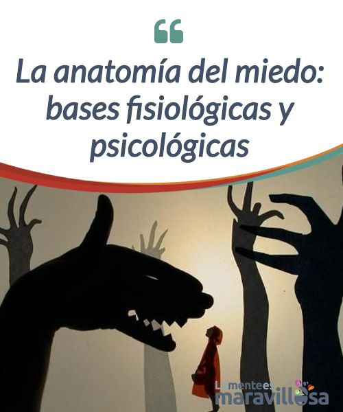 La anatomía del miedo: bases fisiológicas y psicológicas Decía ...