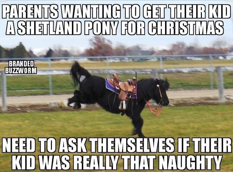 Where To Buy Shetland pony, Funny horse, Horses