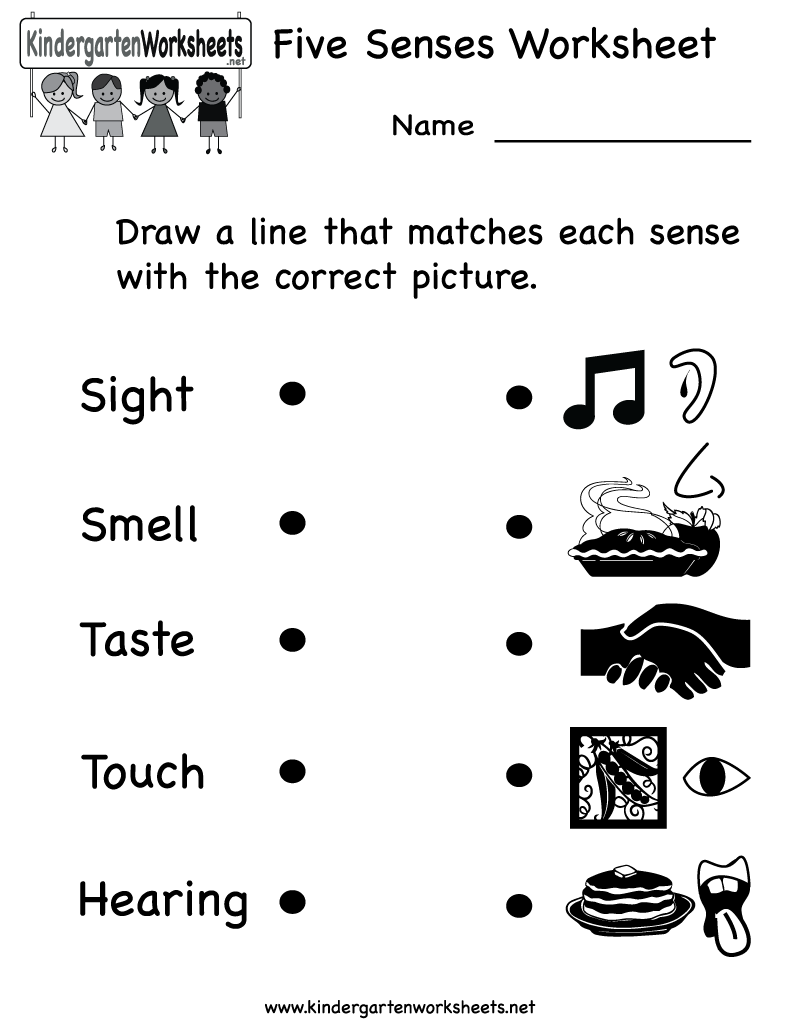 Kindergarten Science Worksheets : Kindergarten five senses worksheet printable teaching