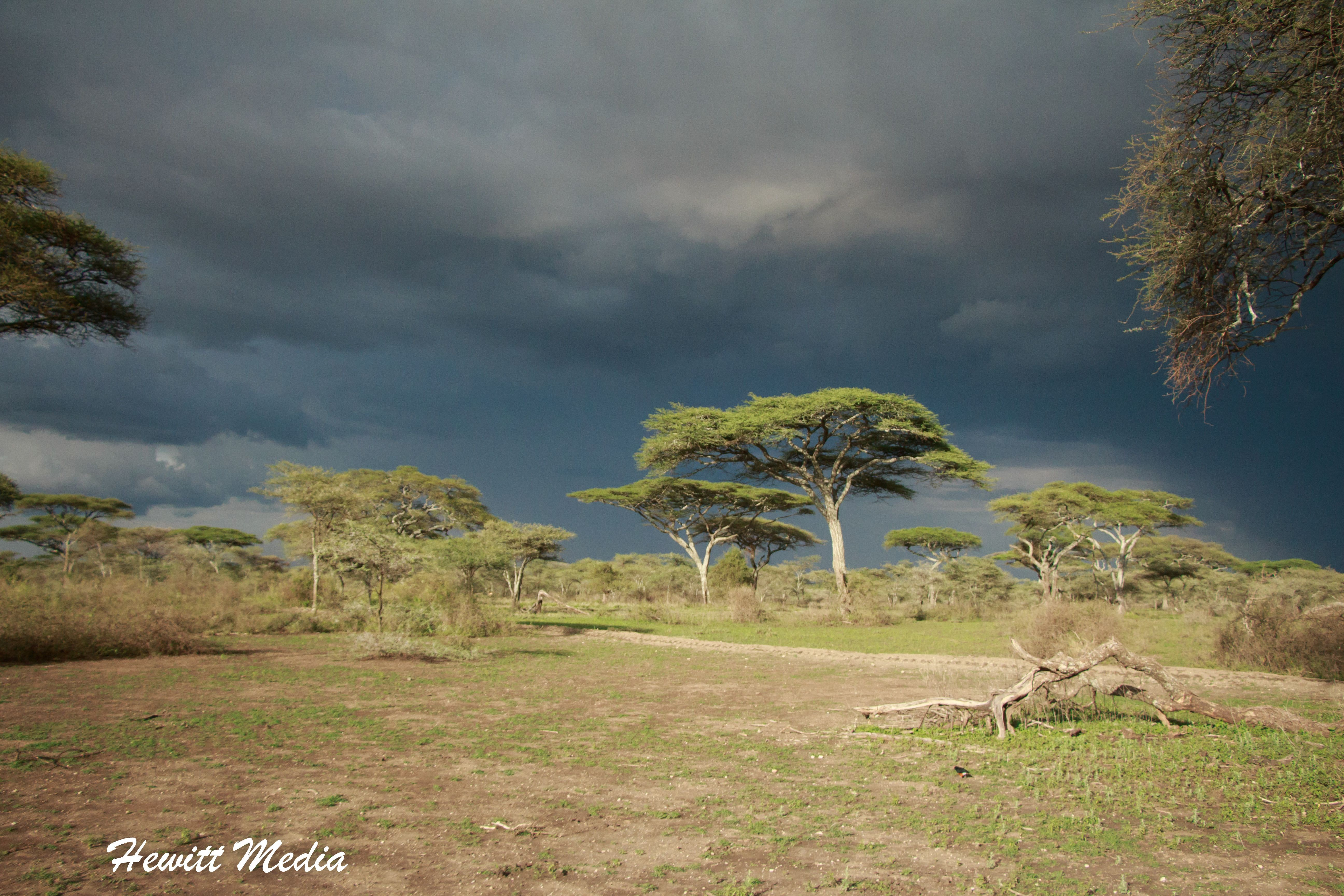 Storm In The Serengeti A Storm Rolls Into The Serengeti National Park In Tanzania It Is Remarkable How Alive Everyt Travel Photos Travel Photography Travel