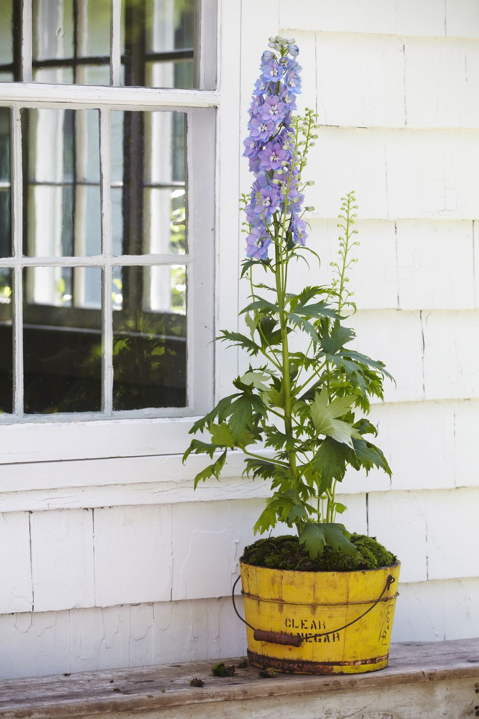 How To Decorate With Annuals And Perennials Inside The Home