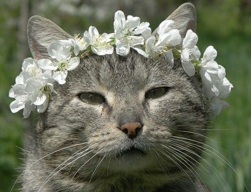 It's summer.  Don't forget to wear flowers in your hair.