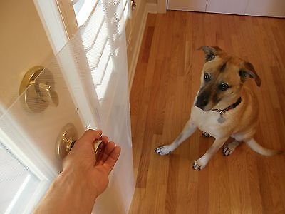 Dog Scratching Door Dog Idea Pinterest Dog And Pet Dogs