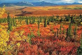 Vegetación de Taiga aclarada con crecimiento de brezal · Fuente: El Blog de Aitana. Vegetación Rasgos Generales. Por lo que respecta a la vegetación, ...