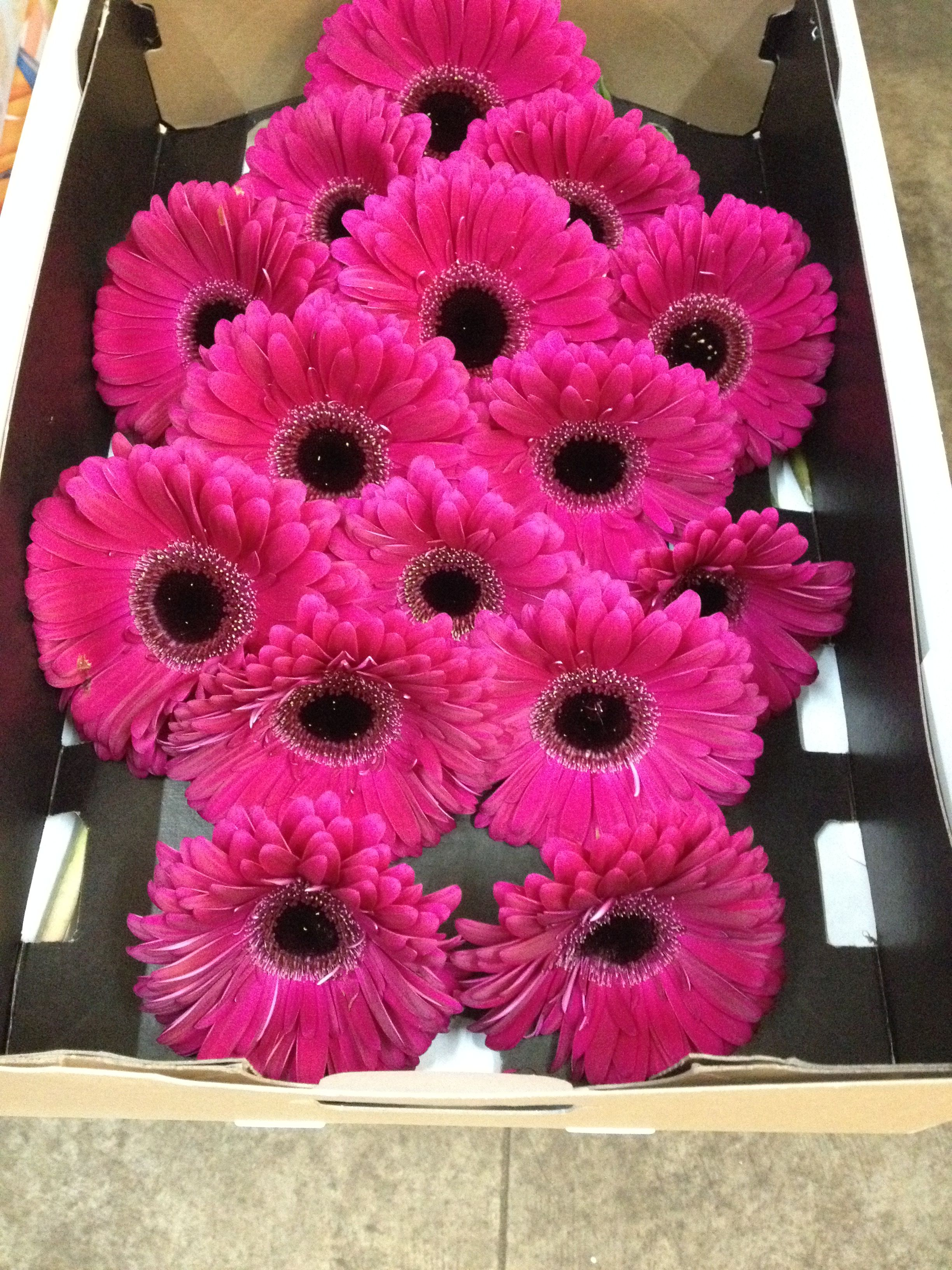 Wholesale Fresh Flowers for DIY weddings and events Diy
