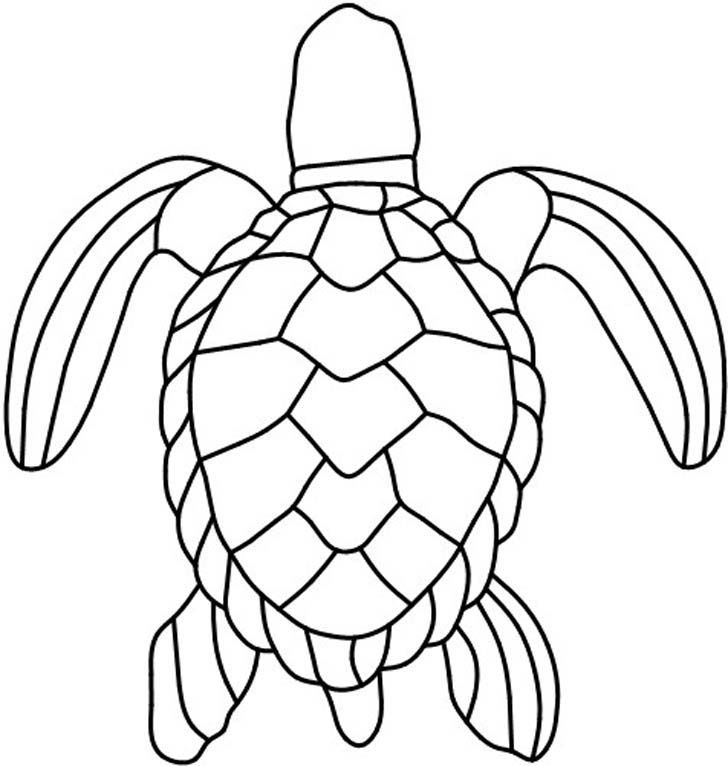 turtle shell drawing
