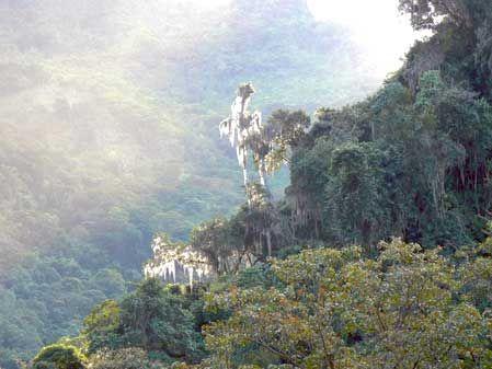 Parque Nacional El Tamá. Fotografía: Alan Jaén