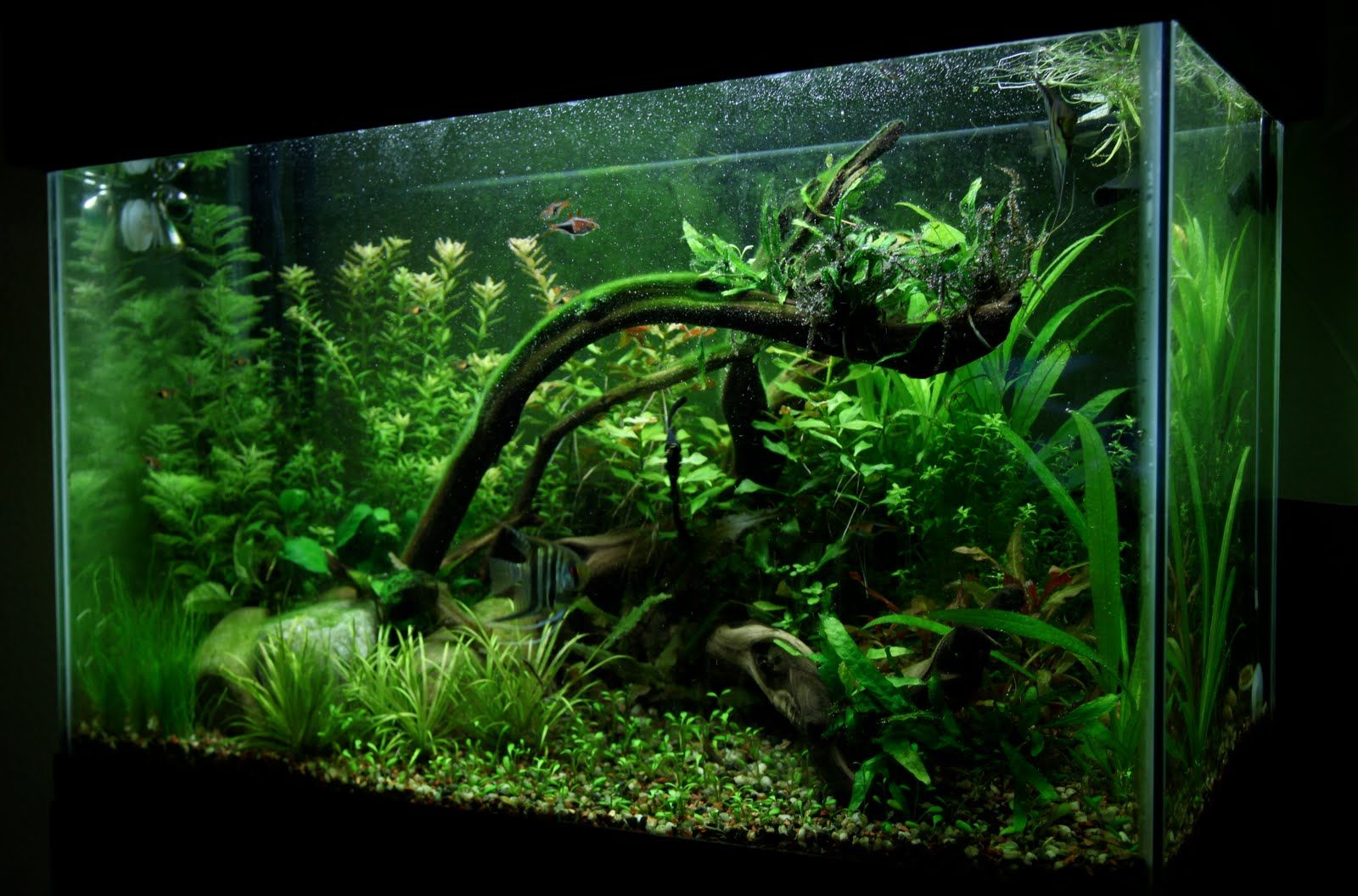 Aquascaping ideas for planted tank 28 images for Planted tank fish