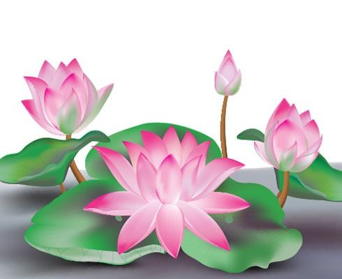 Lotus Flower Cartoon Learn To Sketch Illustrator Cs5