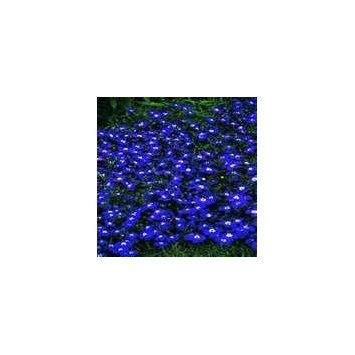 Awesome Post About The Dirty Gardener Lobelia Erinus Half Moon Flowers 200 Seeds