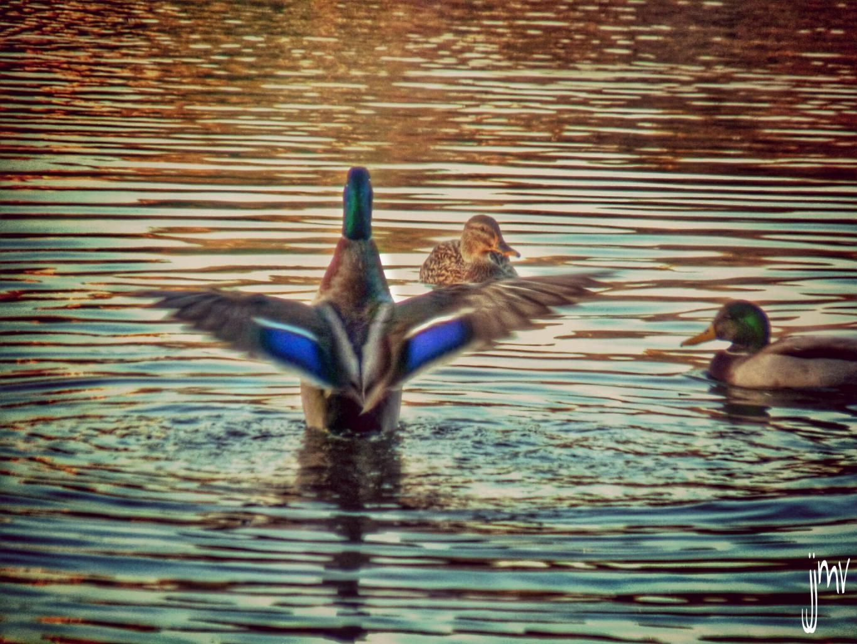 Reedit Good evening my friends :-)) #birds #hdr #photography #petsandanimals