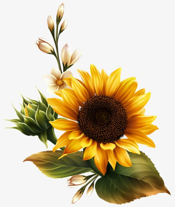 Millions Of Png Images Backgrounds And Vectors For Free Download Pngtree Flower Painting Sunflower Pictures Sunflower Painting