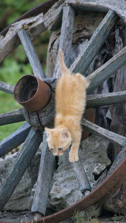 Kitten Kittens Crazy Cats Cat Pics
