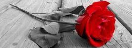 romance - Google Search