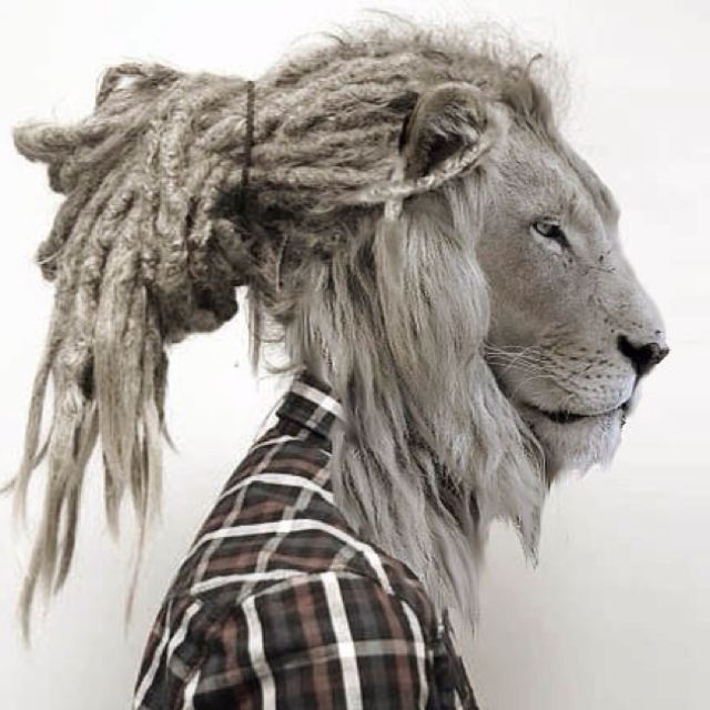 Rusta. Lion.