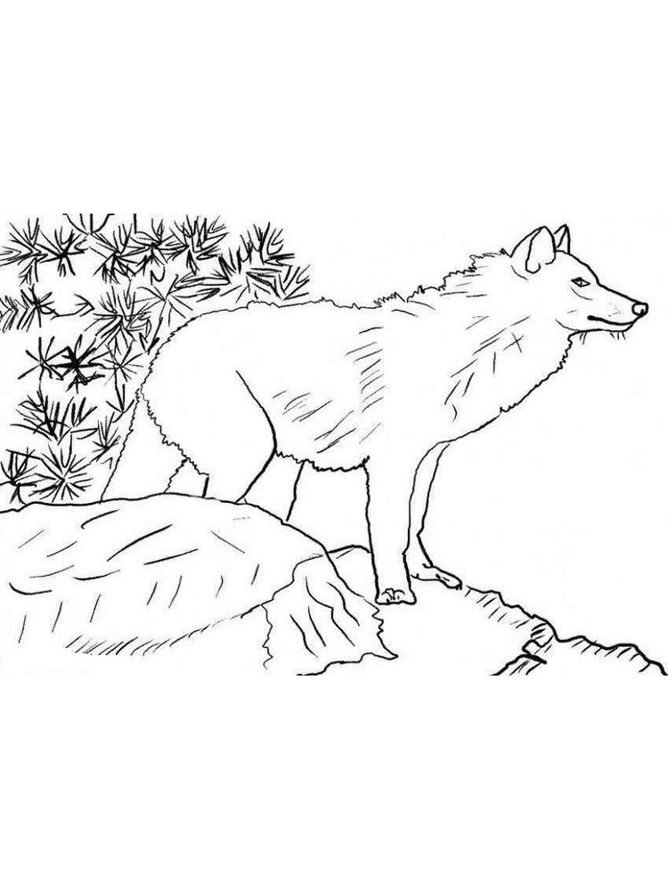 Sheep And Wolves Coloring Pages 1 Wolves Are One Of The Wild Animals Or Hunting Animals That Live In Groups T Wolf Colors Coloring Pages Animal Coloring Pages