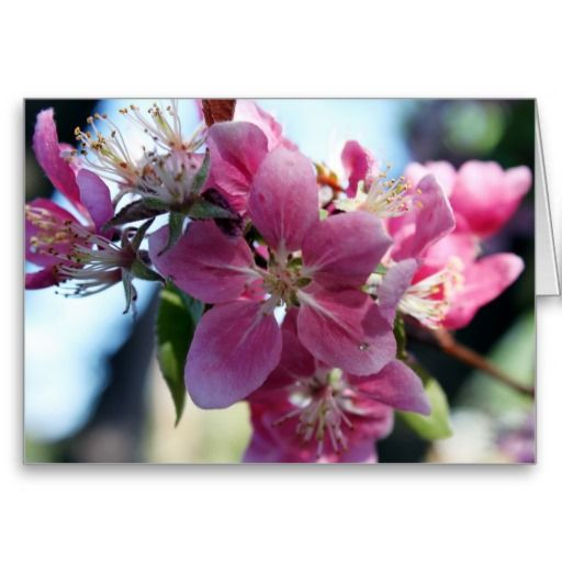 Apple Blossom Notecard from the A2JC4life Designs Zazzle store