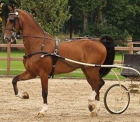 Different Breeds of Ponies | Different types of horse harness ...
