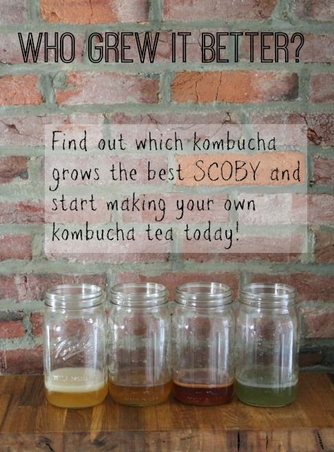 I tested 4 different kombuchas to find out which one grew the healthiest kombucha culture. Find out which won!