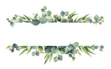 Watercolor vector green floral banner with silver dollar eucalyptus leaves and branches isolated on white background
