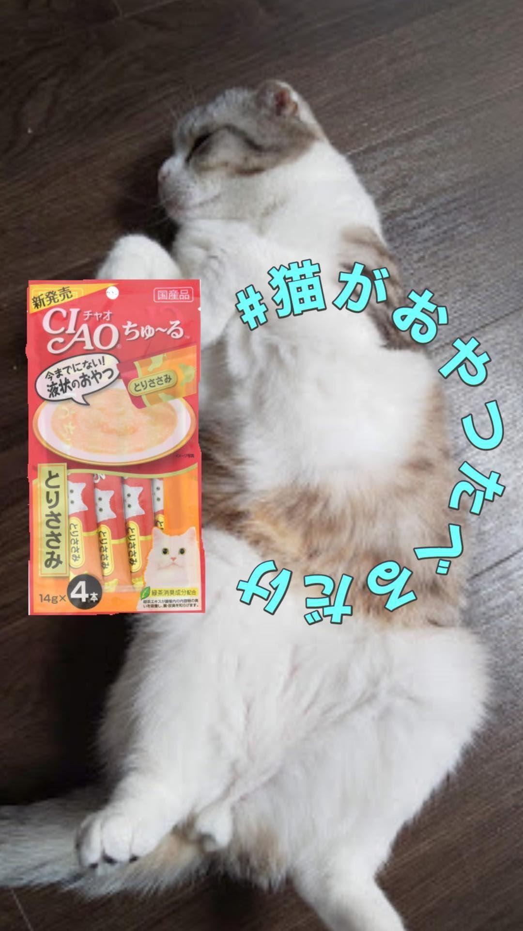 いいね 0件 コメント0件 猫がごはんたべるだけ Naz Tsukimi のinstagramアカウント ハチワレのなずなと スコティッシュのつきみのおやつレビューです 2匹のもぐもぐタイムをのぞいみませんか 食べているごはん Tv