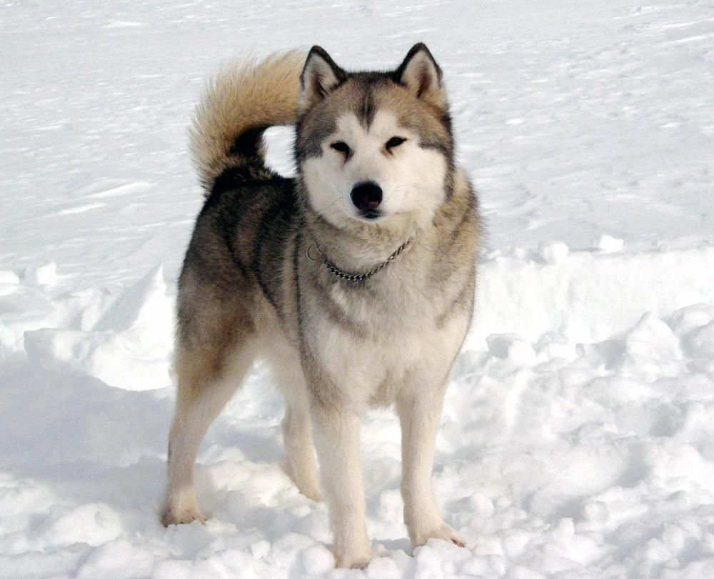 Eight Below Dog Names And Pictures