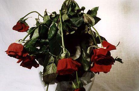 Fix Bent Neck Roses Wiltedredroses Garden Valentines Presents Wilted Rose Valentines