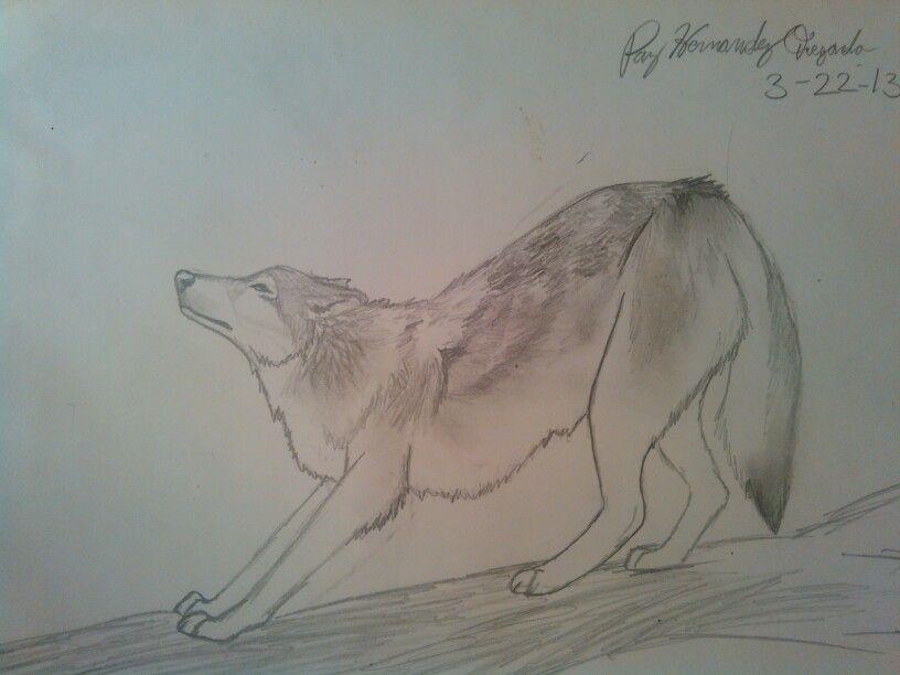 Испуганный волк рисунок карандашом
