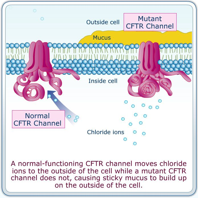 cftr gene. What made me interested in genetics