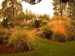 landscaping ideas in florida front yard deer resistant plants  Helictotrichon gdeer
