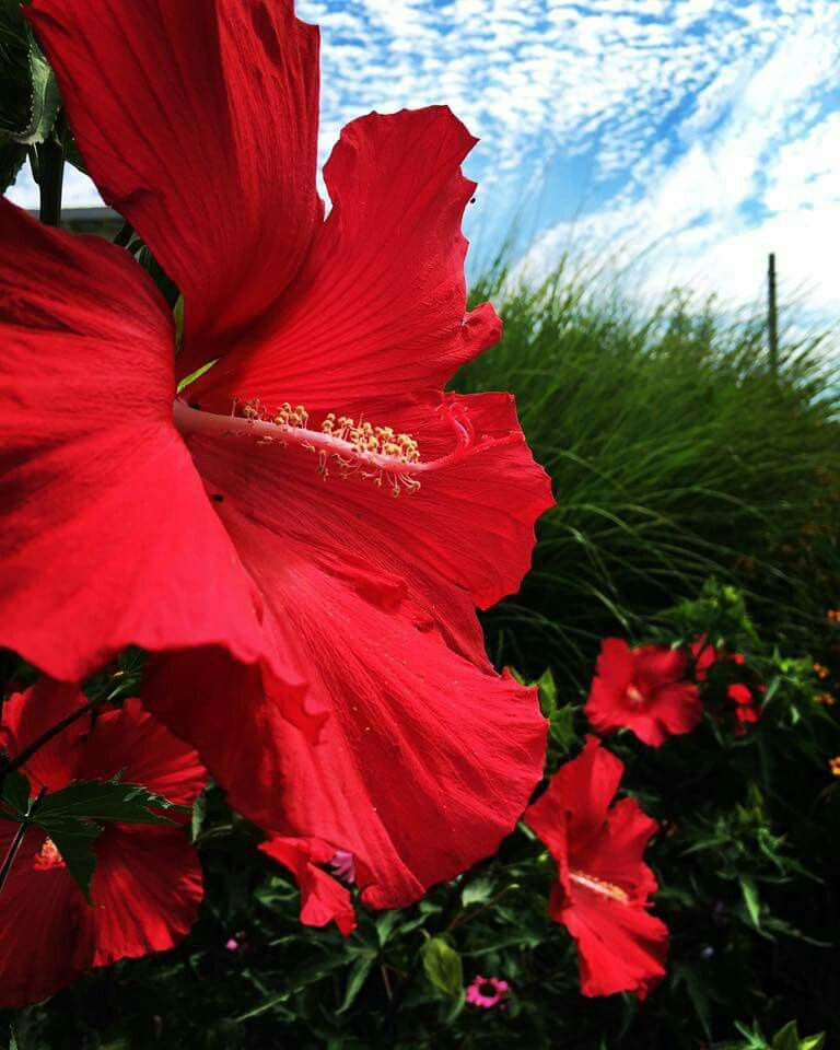 Beautiful red flowers with a blue backdrop