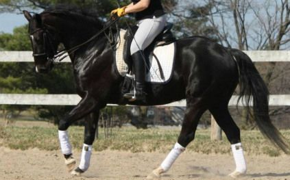 How do you know your horse is using his back? | Horse Listening