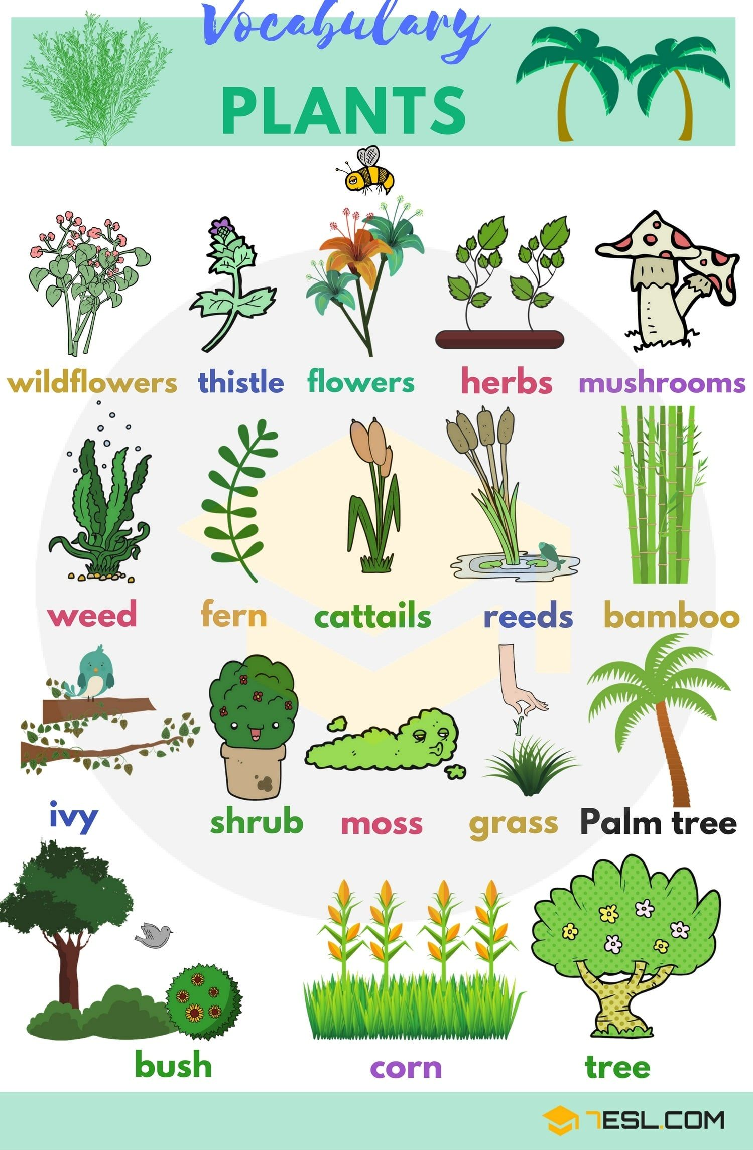 Plant Names: List of Common Types of Plants and Trees ...