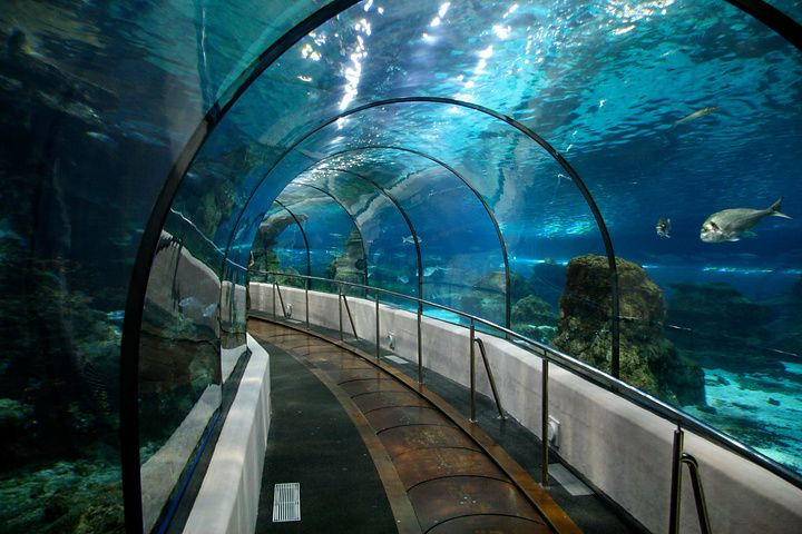 L Aquarium De Barcelona Places To Visit Barcelona Travel