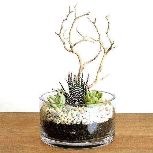 Photo of Zen Zebra Manzanita Succulent Terrarium Kit